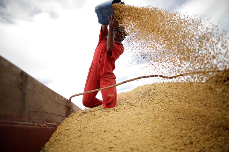 © Reuters. Trabalhador em caminhão de soja em Campos Lindos