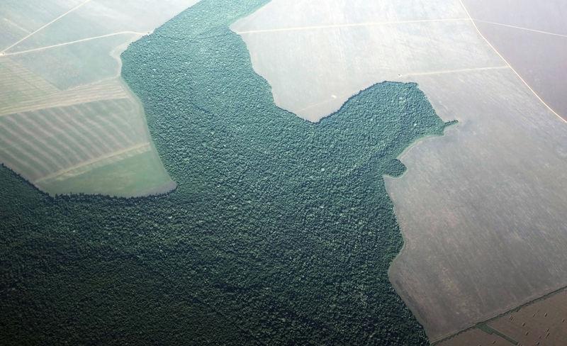 Desmatamento no Brasil dispara em julho e ameaça acordo comercial com
