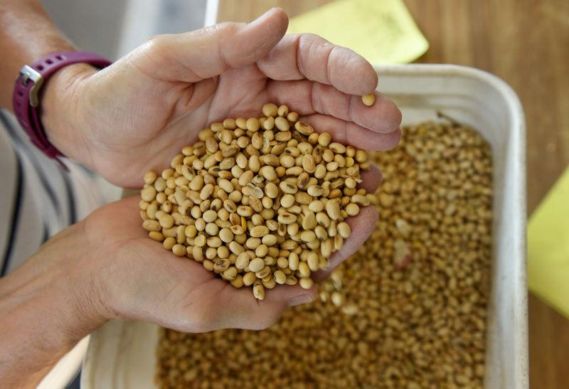 © Reuters. Vannessa Kummer evaluates soybeans near Colfax, North Dakota