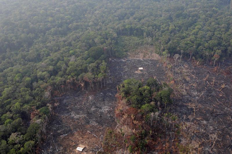 © Reuters. AMAZONIA: ПРОБЛЕМЫЕ ДИСКУССИИ ДЛЯ