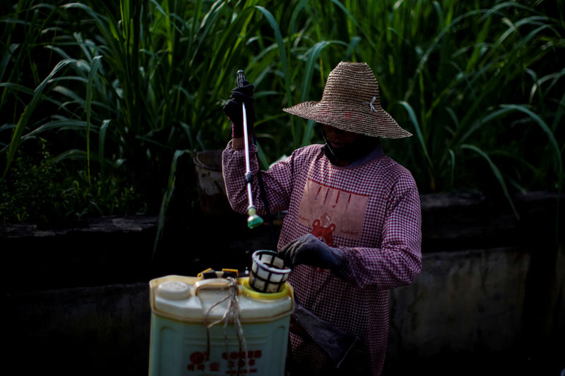 Exclusive: China sugar industry to lobby government for extension of h