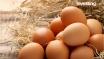 Jaja droższe od mięsa drobiowego i to zapewne jeszcze przez jakiś czas